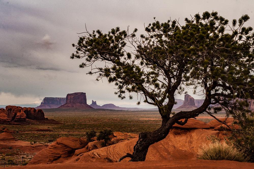 Mystery V Tree