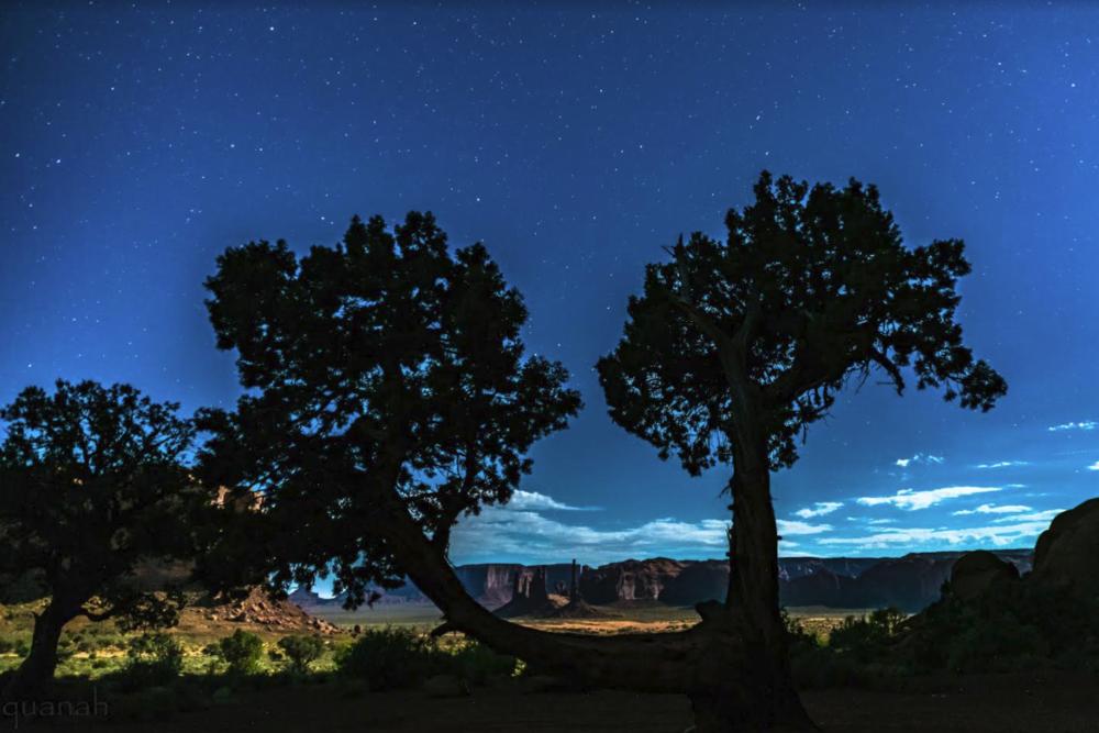 Midnight Money Tree