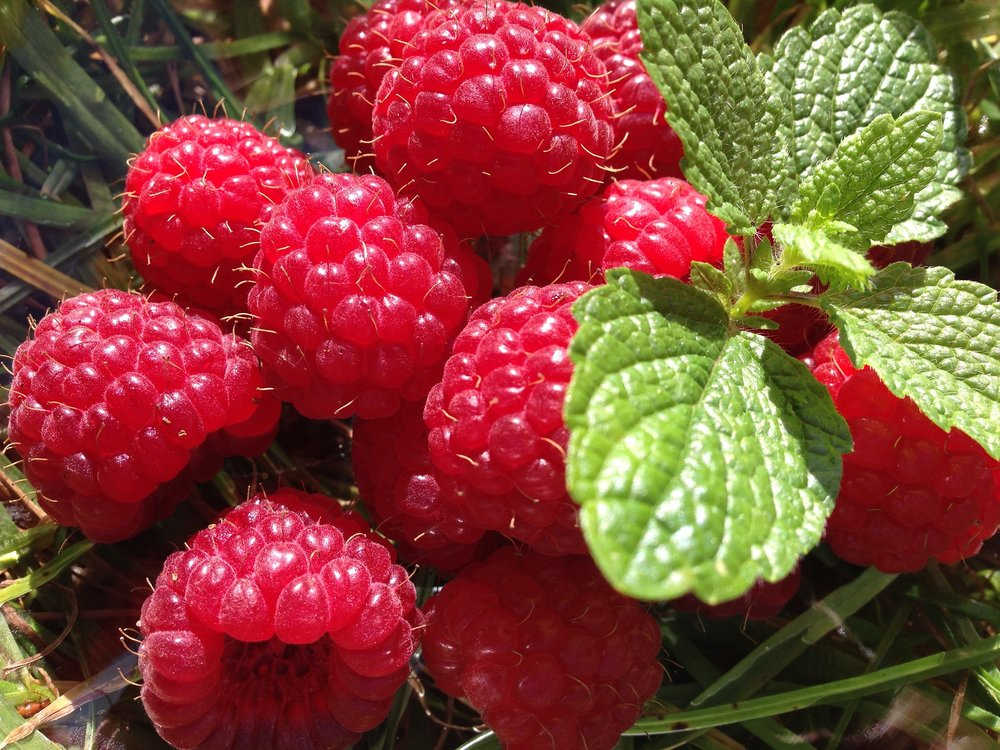 Your baby is approximately the size of a raspberry this week.
