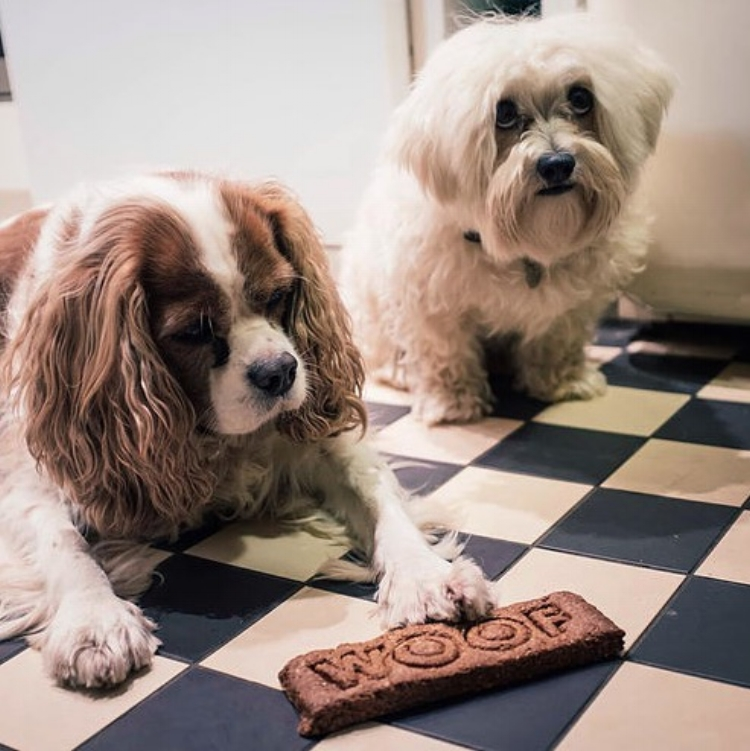 Vicky's products come with a paw of approval from Harvey and Ralph, her own four legged friends.