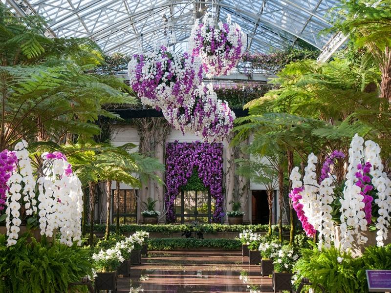 262204_Orchid Extravaganza_Albee_ Larry_0.jpg