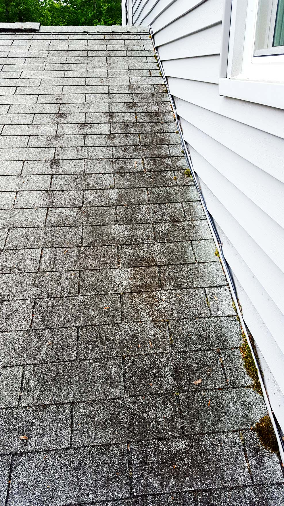 20150609_161822-black-mold-on-roof-large.jpg