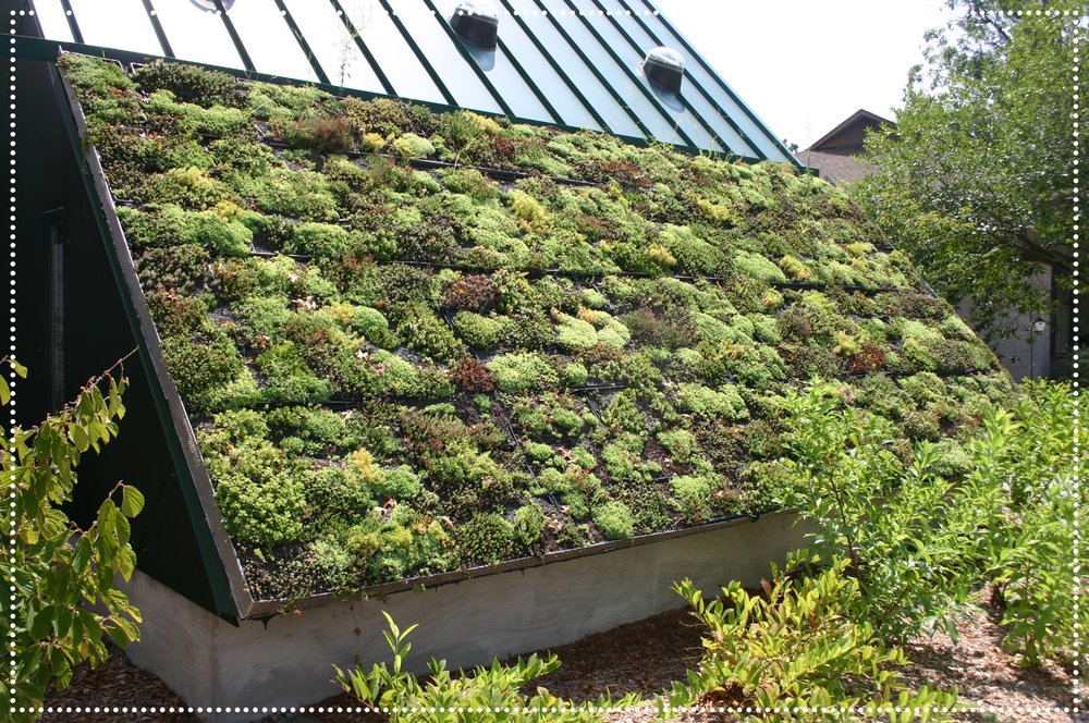 Awesome_Green_Roof.jpg