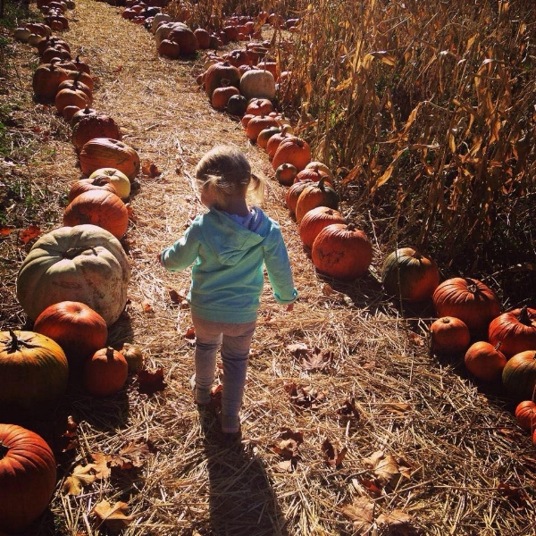 PART OF THE JOY FOR US IS WATCHING LITTLE ONES AND THEIR AMAZEMENT OF THE PUMPKINS. NOTHING MAKES OUR HEART HAPPIER THAN SEEING THE SMILES WHEN A LITTLE ONE FINDS THEIR PERFECT PUMPKIN!