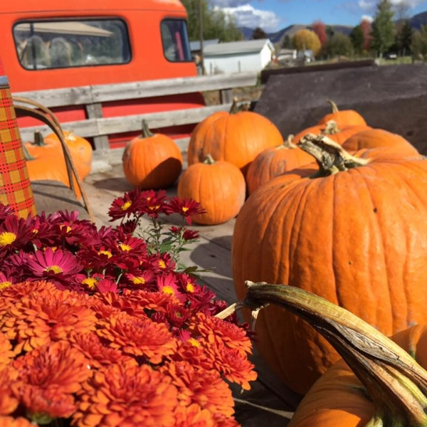 tHE BEAUTY OF BLUE SKIES, CRISP FALL MONTANA DAYS FILLED WITH FALL FLOWERS AND PUMPKINS ON THE FARM JUST MAKE US SMILE EVERY YEAR! wE NEVER GET TIRED OF FALL DAYS AT TURNER FARMS! CAN'T WAIT TO SHARE THE BEAUTY WITH YOU THIS YEAR!!