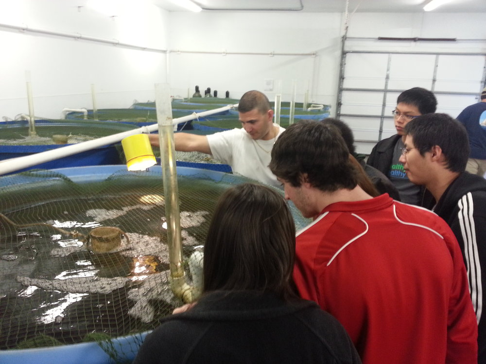 Field trip to the nearby NC State University Marine Aquaculture Center in Marshallberg, NC. The center's director, Dr. Marc Turano, explains the processes, difficulties, and opportunities of growing saltwater fish in a land-based system, contributing to class discussions on the role and impacts of aquaculture locally and globally. (Marine Fisheries Policy 2013)