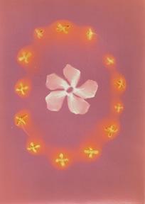 Sunburst Oleander with Ring