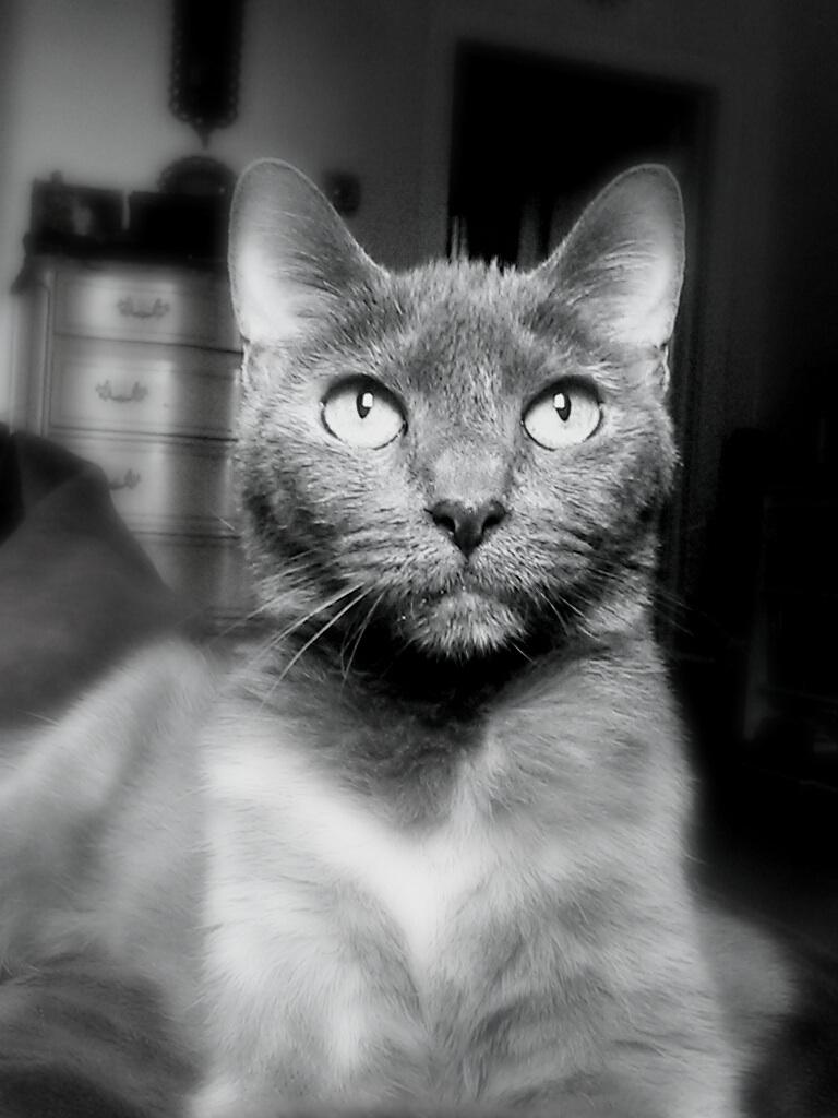 Rhoda Portrait.jpg
