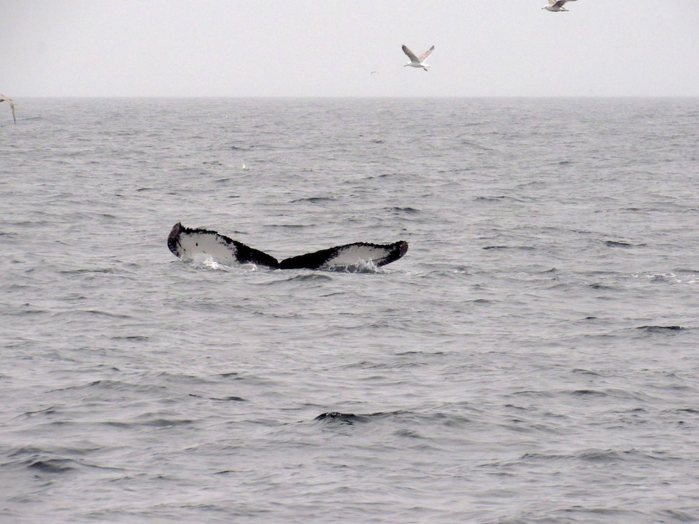 Whale Tail & Birds