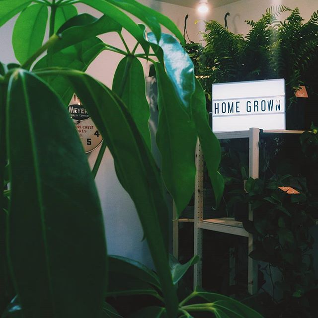 Congrats to @homegrownbk in their new space in  @concreteandwater! So many happy plants -- #happyplants #williamsburg #brooklyn #plants #pottedplants #plantselfie #plantstagram #smallbusiness #startup #supportsmallbusiness #greenthumb #thegreatindoors #naturalista #currentdesignsitch #greenery #plantlife #green #plantsplantsplants #design #graphicdesign