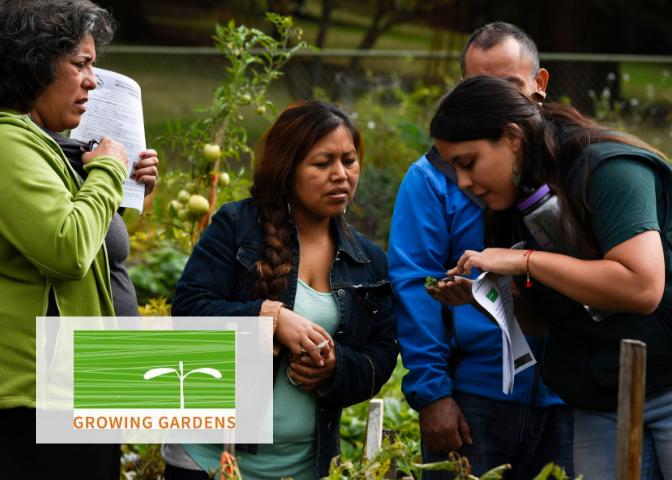 2009: Growing Gardens