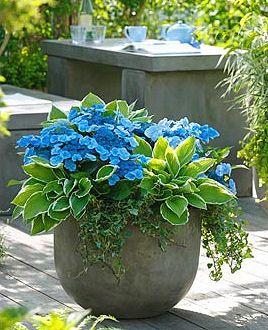 hosta_hydrangeaplanter.jpg