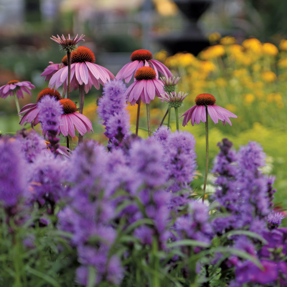1-Perennials.jpg