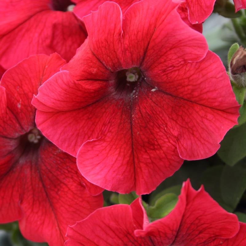 Full Flats • Annuals, herbs, Veggies • 11.97