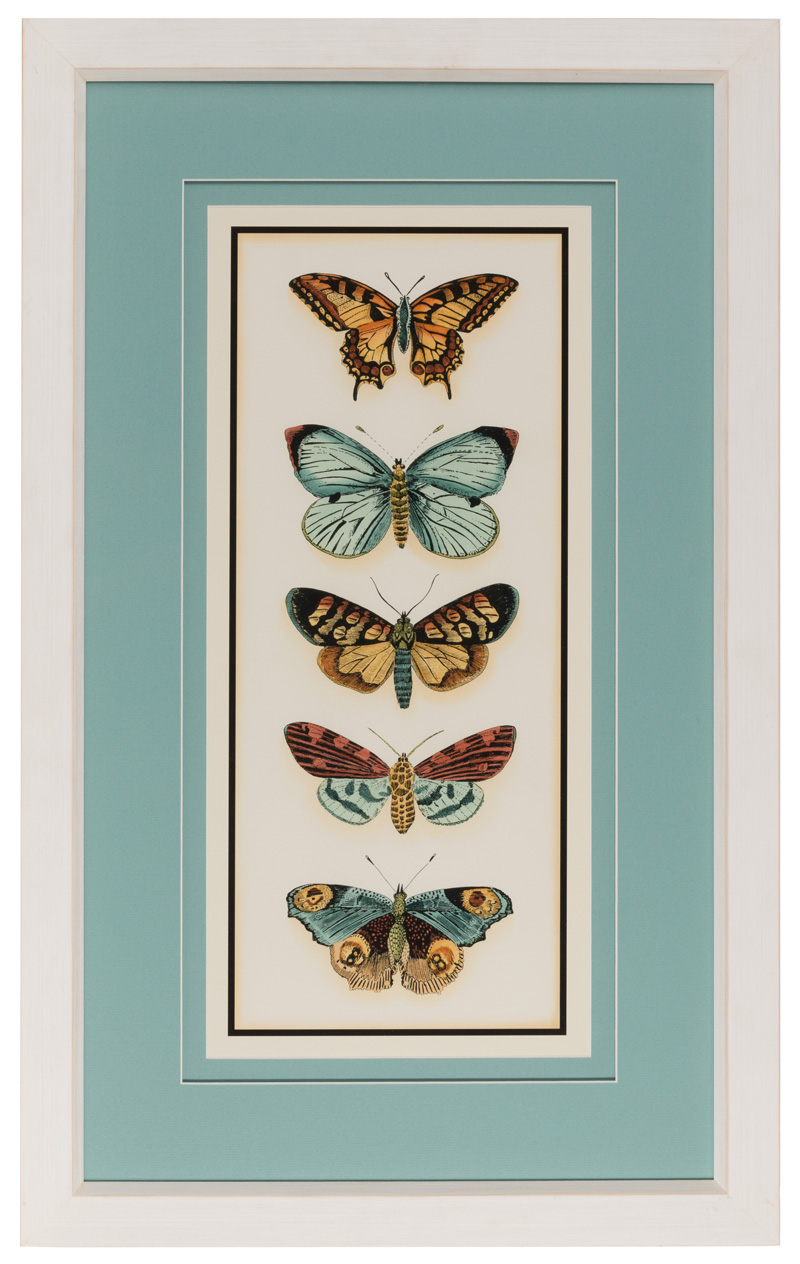 45607 Butterflies.jpg
