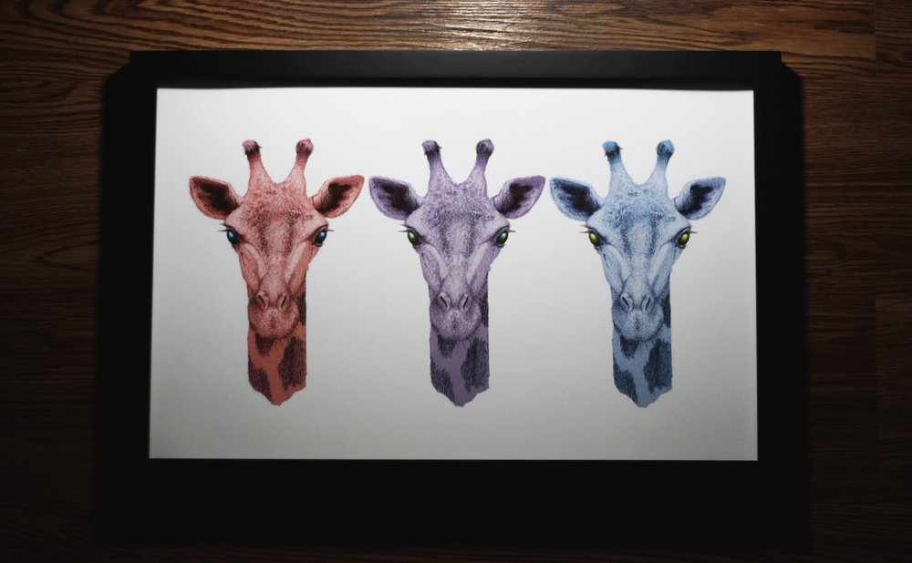 Tri color giraffe print for a show