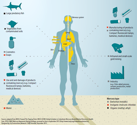 Why is mercury a problem?   -  Mercury and most of its compounds are highly toxic to humans and the environment. Large amounts can be fatal, and even relatively low doses can have serious health effects, affecting the nervous system in particular. The European Union countries join Sweden, Norway, Denmark and Germany which have already banned or restricted use of mercury in dental fillings.
