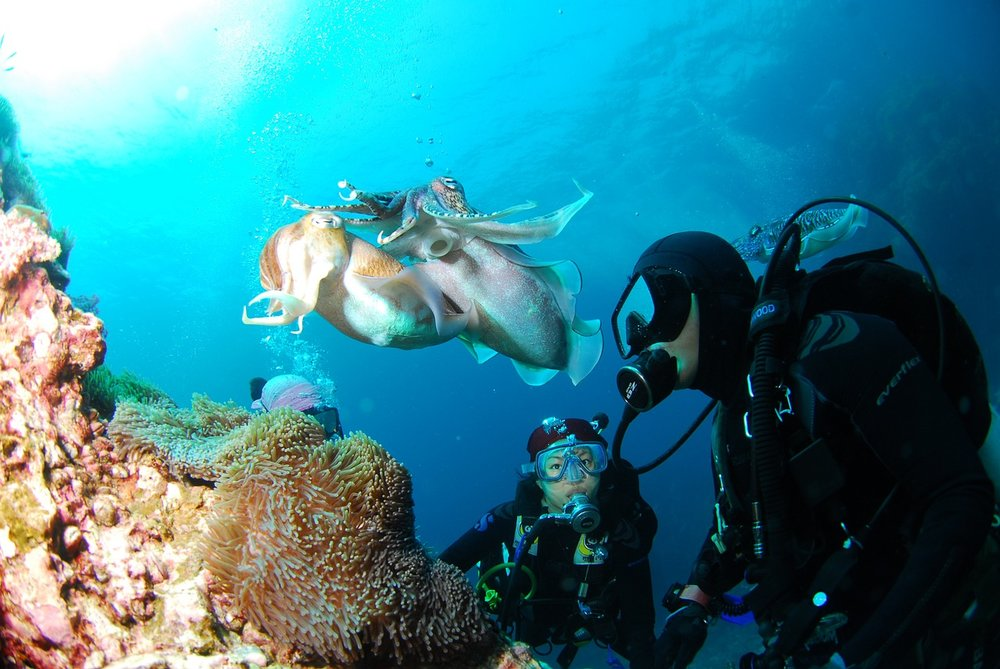 The Best Reasons Why You Need to Try Scuba Diving in Malta