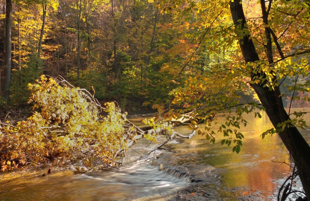 autumn_trees_ohio_creek_forest_waterfall_stream_hiking-428957.jpg
