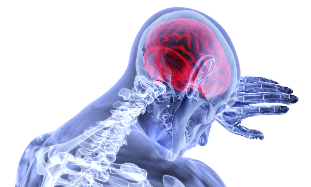 brain-3168269_1280.png