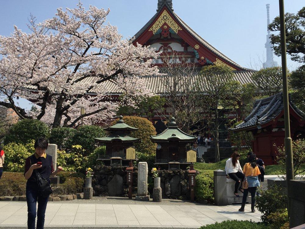 Sensoji Shrine garden, Asakusa, Tokyo