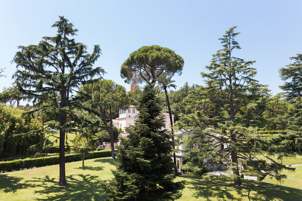 The lush green of the Vatican Gardens