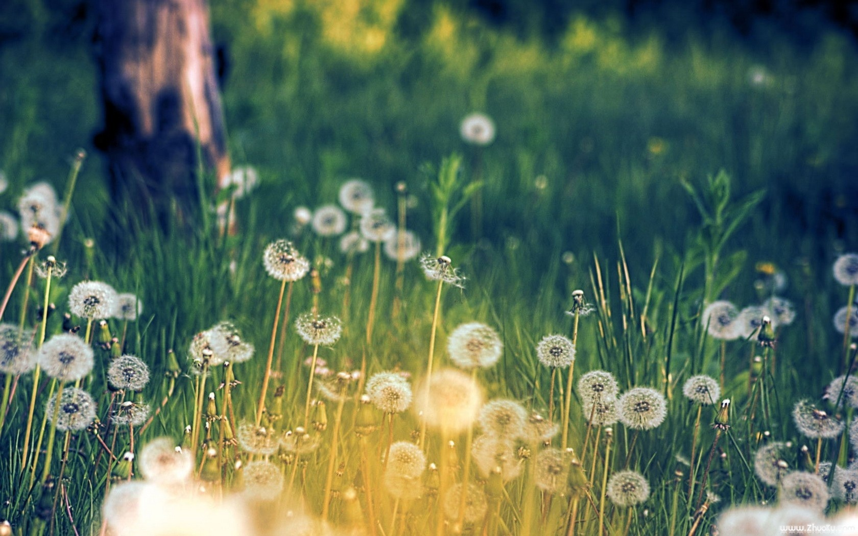 tumblr_static_flower-meadow-_dreamy