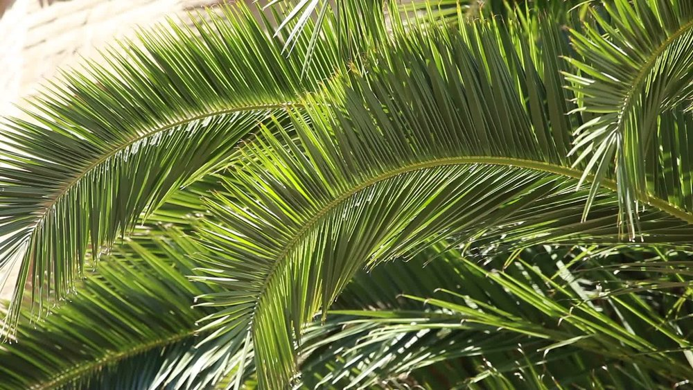 palm2.jpeg