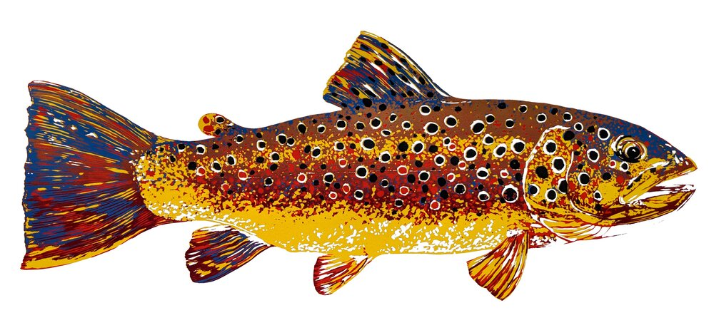 Brown Trout III, 2019