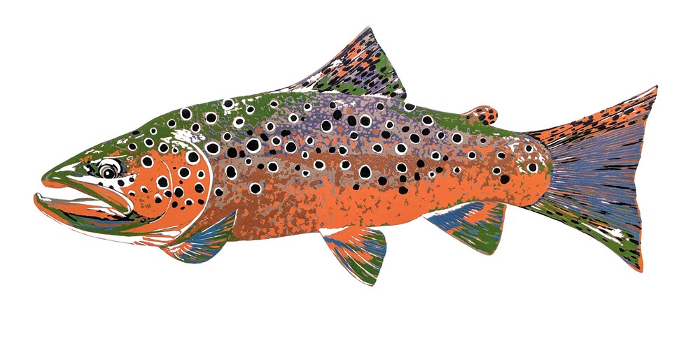 Spawning Brown Trout, 2017