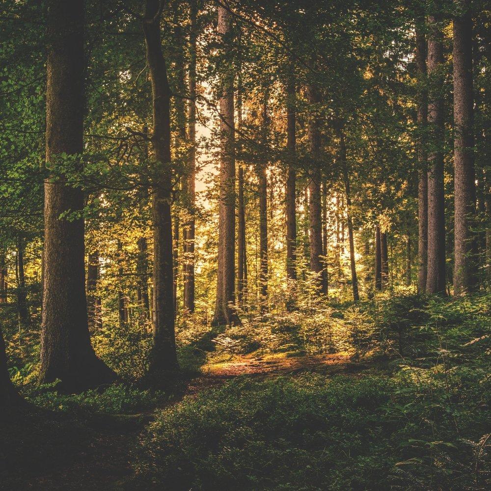 conifer-dawn-daylight-167698.jpg