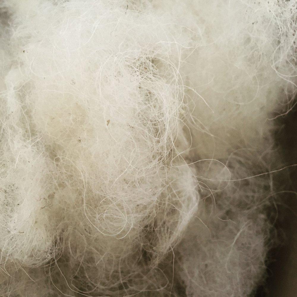 Shetland Fleece - Freshly Carded