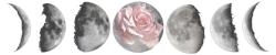moon+rose+center1.jpg