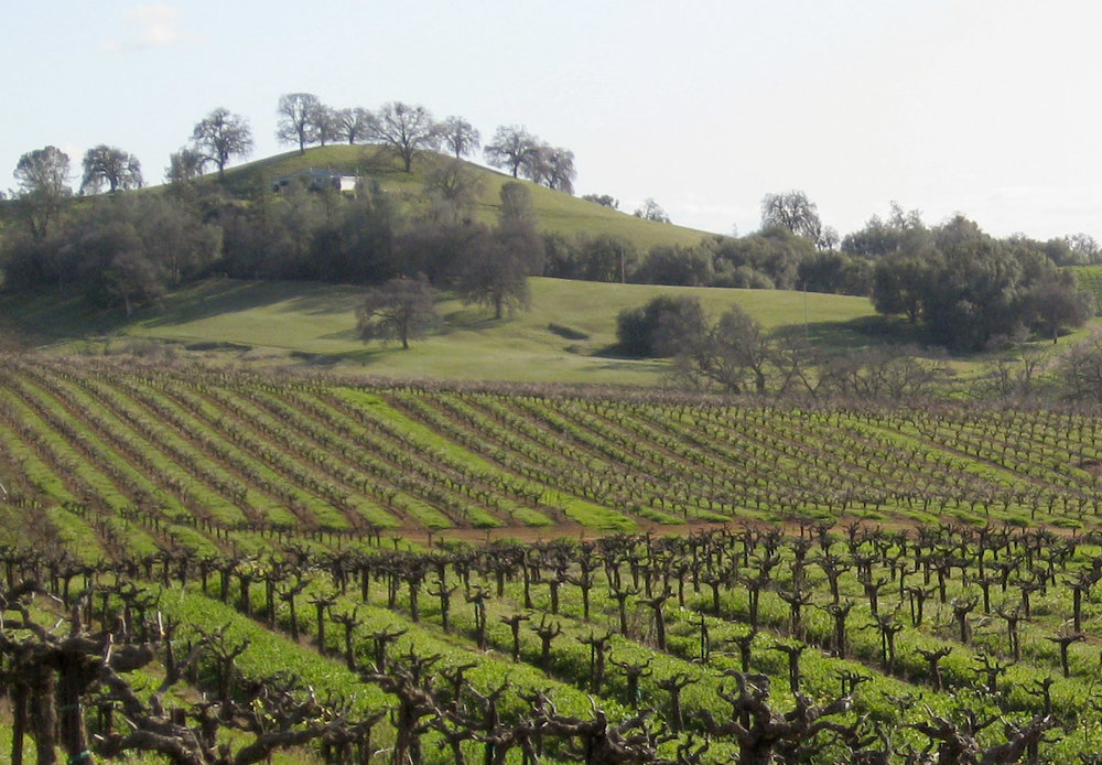 vineyard IIb.jpg
