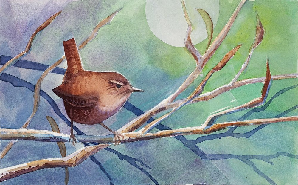 Wren in Winter  | watercolor and gouache | 10 x 14 framed | $240