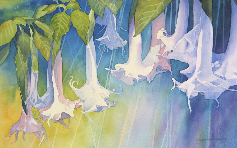Angel's Trumpet  | watercolor | 22 x 15 | SOLD,  prints available