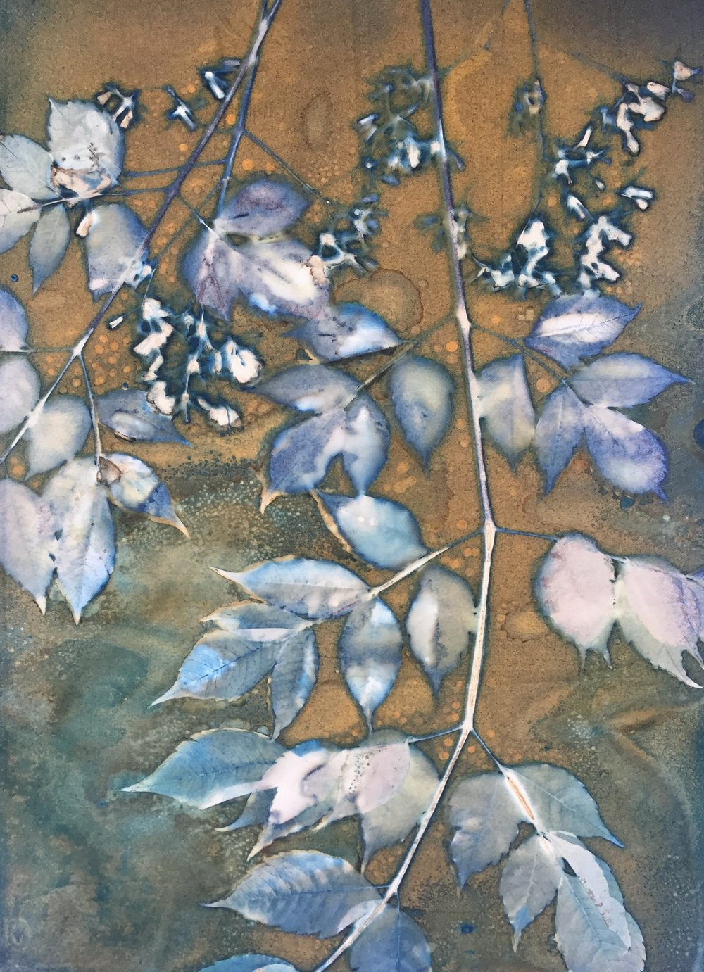 Spring in the Alley 3  | cyanotype | 16 x 20 | SOLD