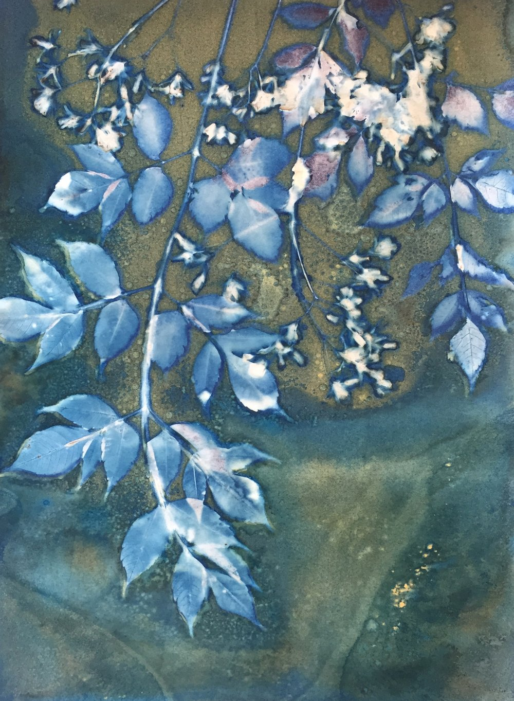 Spring in the Alley 1  | cyanotype | 16 x 20 | $300