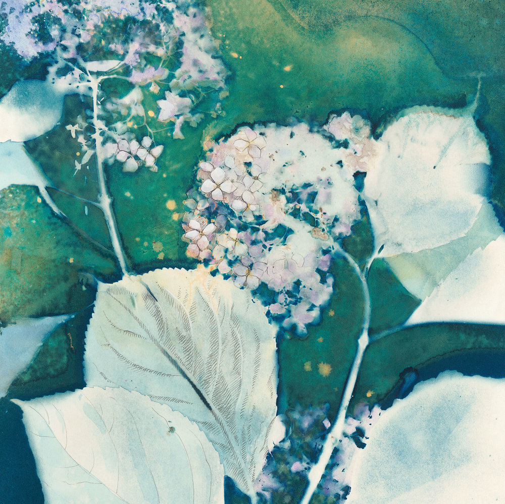 Cottage Garden in the Rain  | 14 x 14 | altered cyanotype on cradled panel | SOLD, prints available