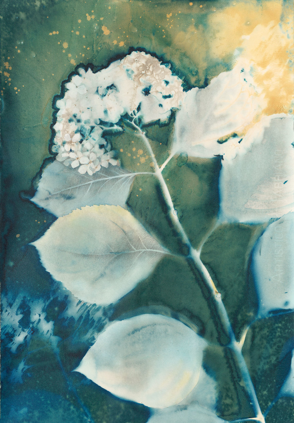 Nocturne  | 14.5 x 21 | altered cyanotype on cradled panel | $350