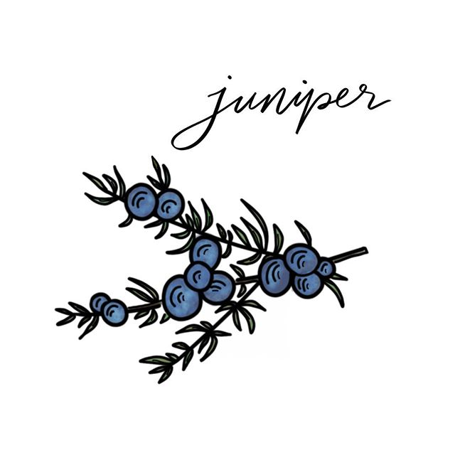 #botanicalchallenge #lettering #lettered #handlettered #draw #drawing #juniper #letteringdaily #handlettering #ipadpro