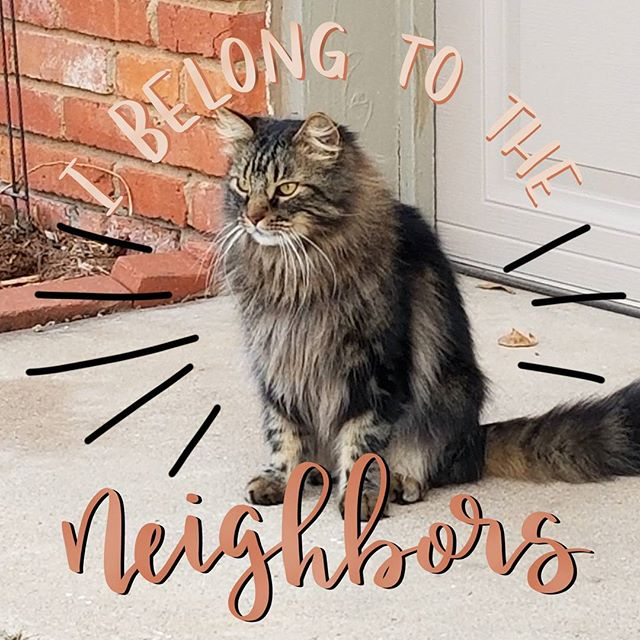 This majestic beast belongs to the neighbors...but becomes mine when there's food available. . . . . #thisisnotmycat #notmycat  #cat #neighborscat #catsofinstagram #lettering #handlettering #ipadlettering #procreateapp