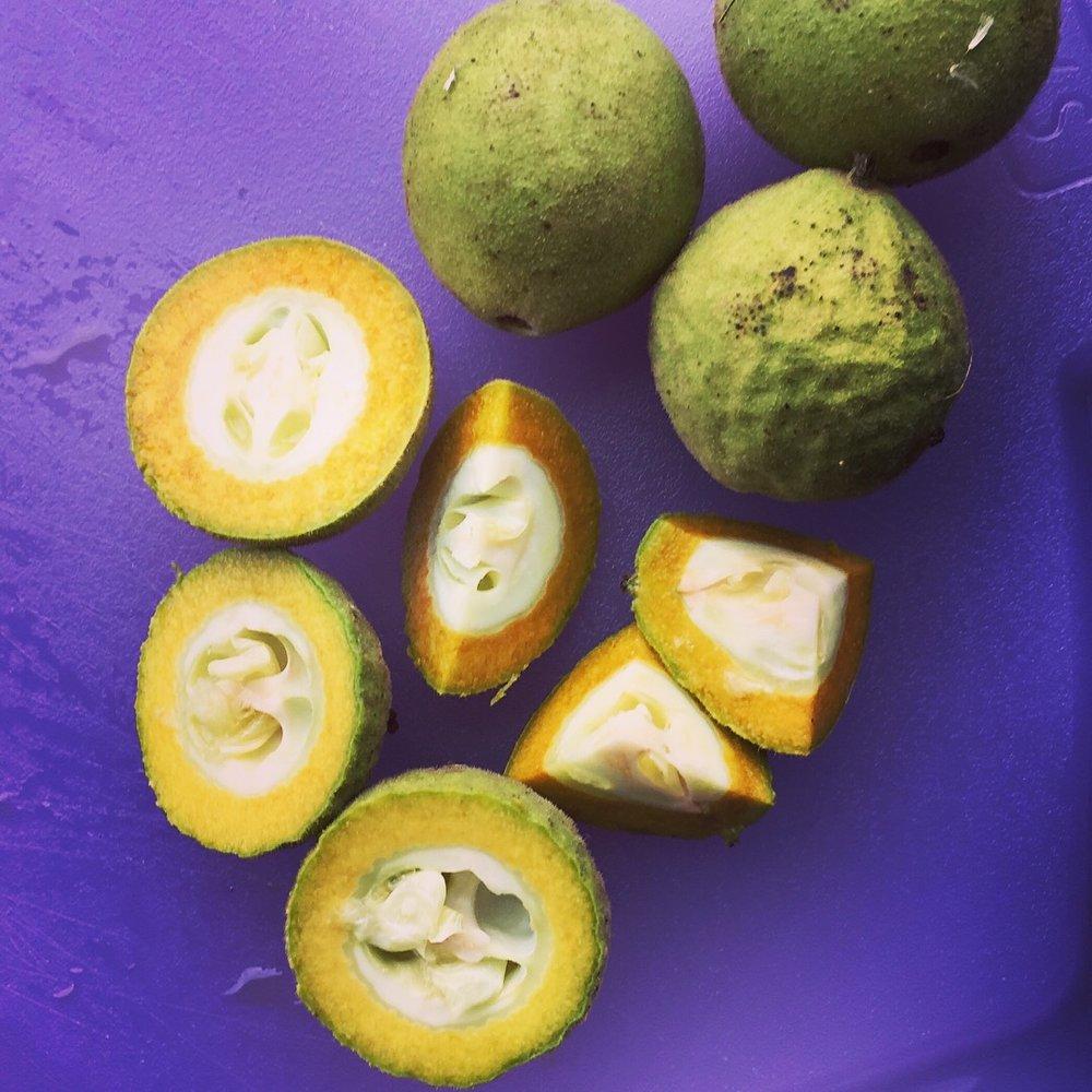 Green walnuts start obviously oxidizing immediately