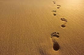 Первые шаги и первые трудности -