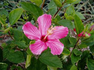 flower01_okinawa.jpg