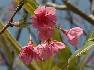 flower02_okinawa.jpg
