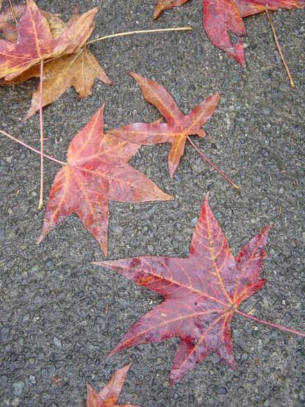 autumn01.jpg