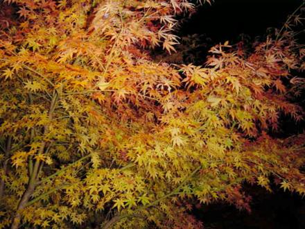 autumnleaves03.jpg
