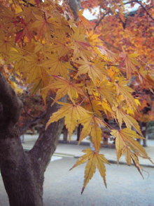 autumnleaves05.jpg