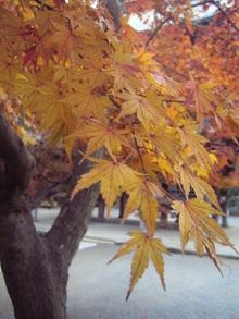 autumnleaves05.jpg